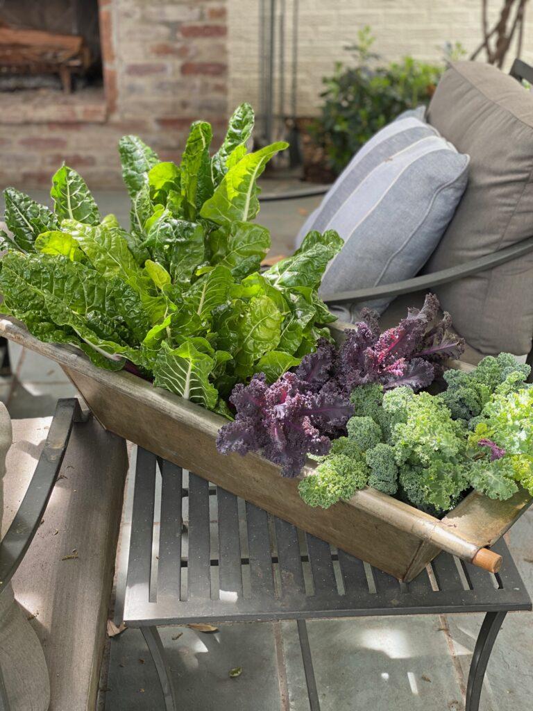 backyard garden kale